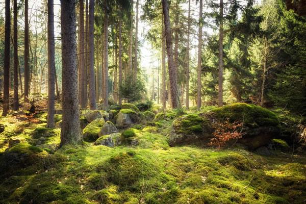 Der Harz - mystisch und urwüchsig